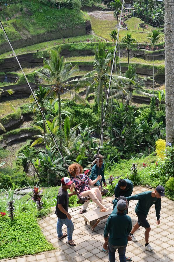 Foreign tourist swinging in the paddy field of Bali island. BALI, INDONESIA- 14 FEB, 2019: Foreign tourist swinging in the paddy field of Bali island stock photography