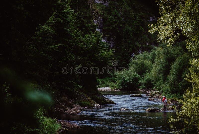 Forelle-Fischen im Gebirgsfluss in der Sommerzeit lizenzfreie stockfotografie