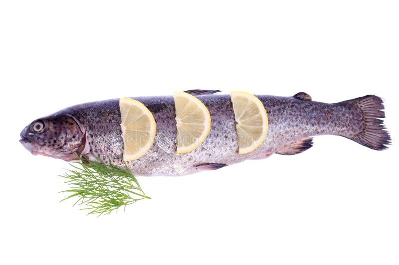 Download Forelle mit Zitrone stockfoto. Bild von köstlich, flosse - 26364820