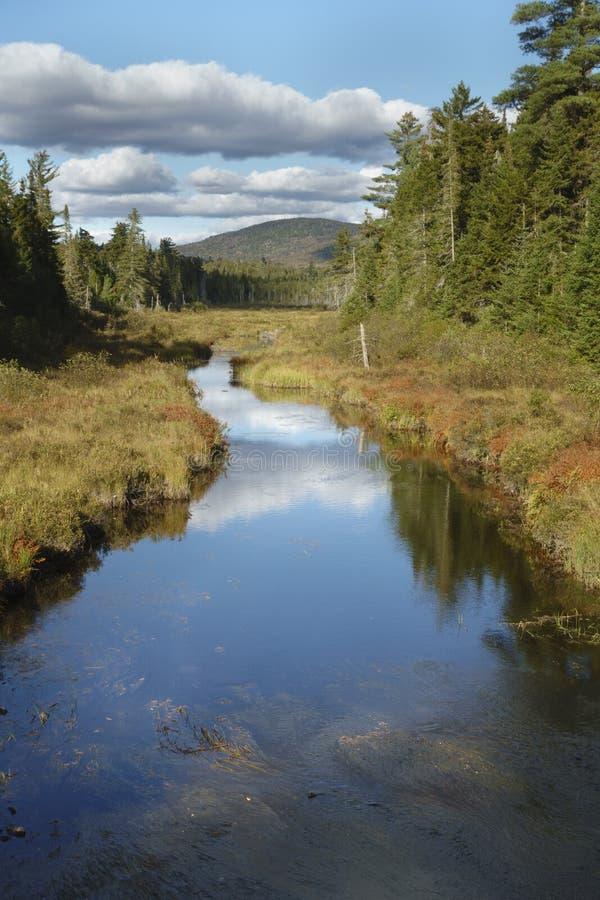Forellström i de Adirondack bergen av New York royaltyfria bilder