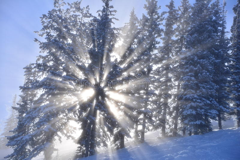 Forelst mágico do inverno imagem de stock