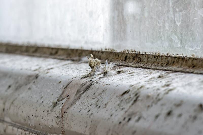 Foremka i brud na okno zdjęcia stock