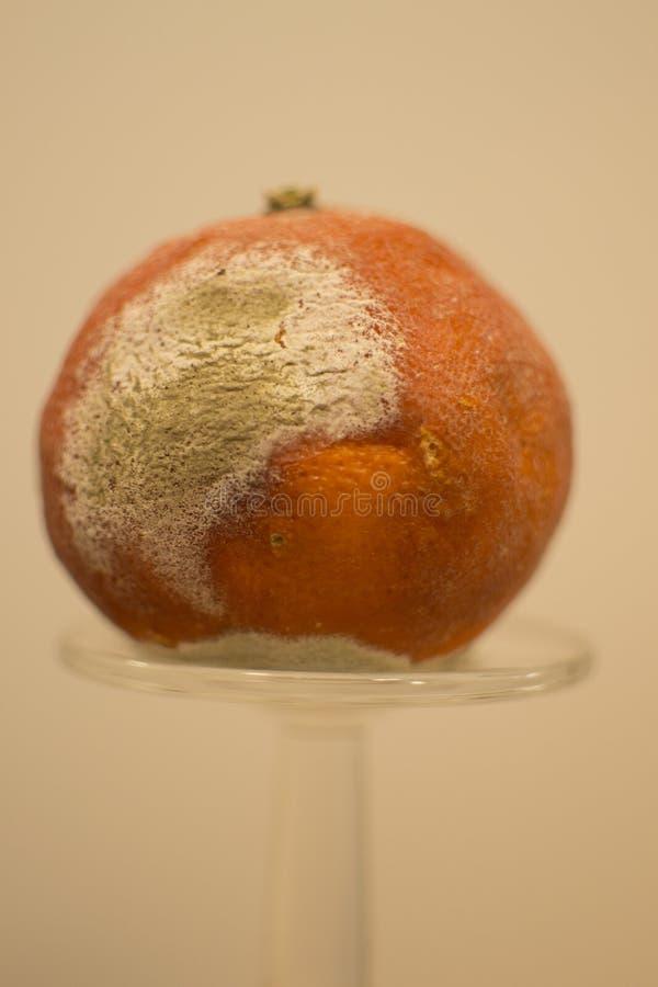 Foremka na pomarańcze obrazy royalty free