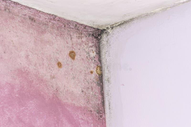 Foremki i wilgoci buildup na menchii ścianie zdjęcia royalty free