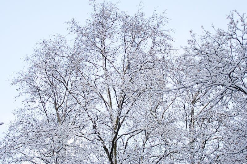 Fores? di inverno orizzontale fotografia stock