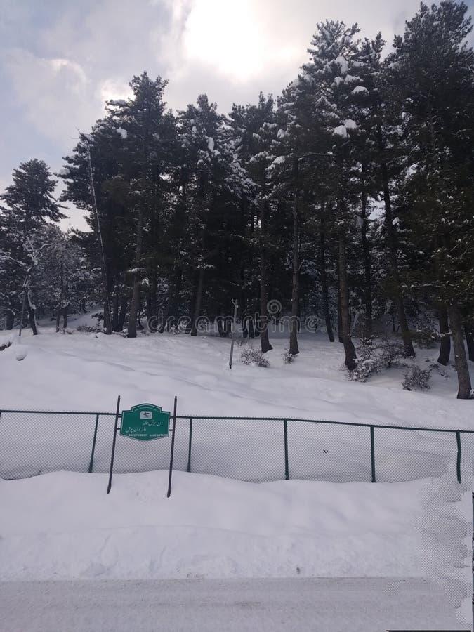 foresr unter Schneewinter Kaschmir stockbilder