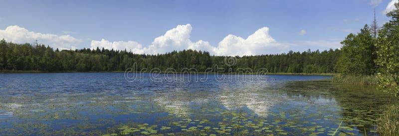 Forest湖。 免版税库存图片