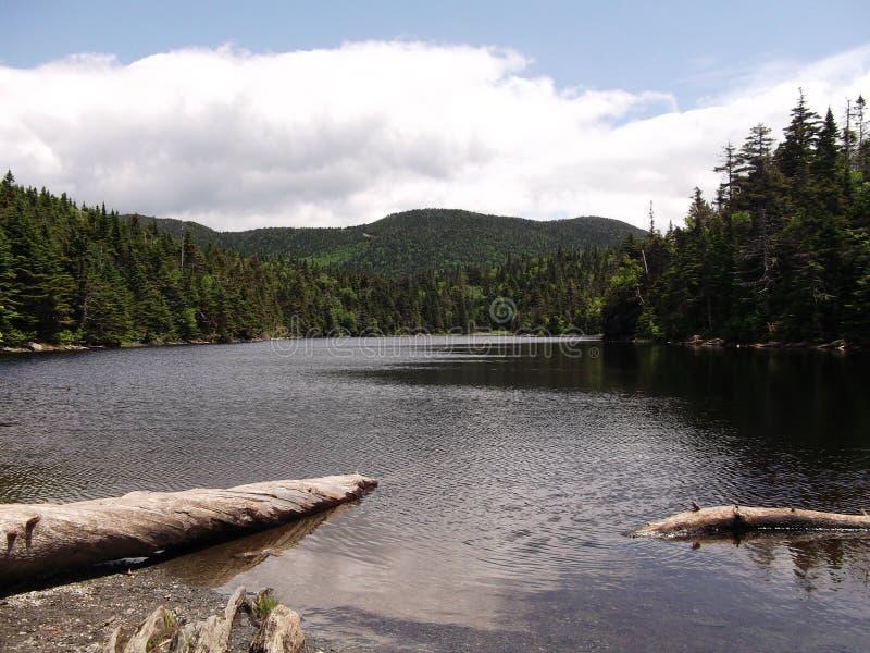 Forest湖2 免版税库存图片
