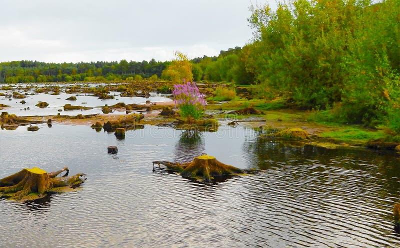Forest湖 库存图片