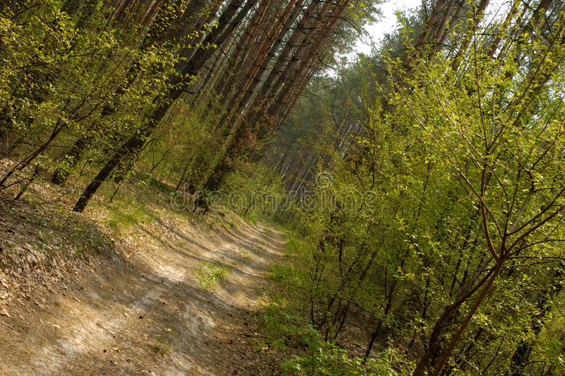 Forest 1 royalty free stock photography