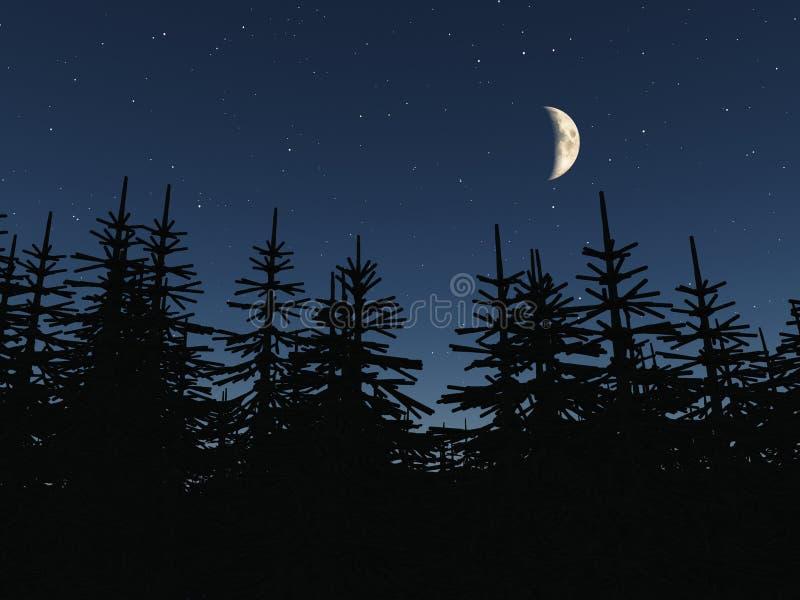 Forest vector illustration