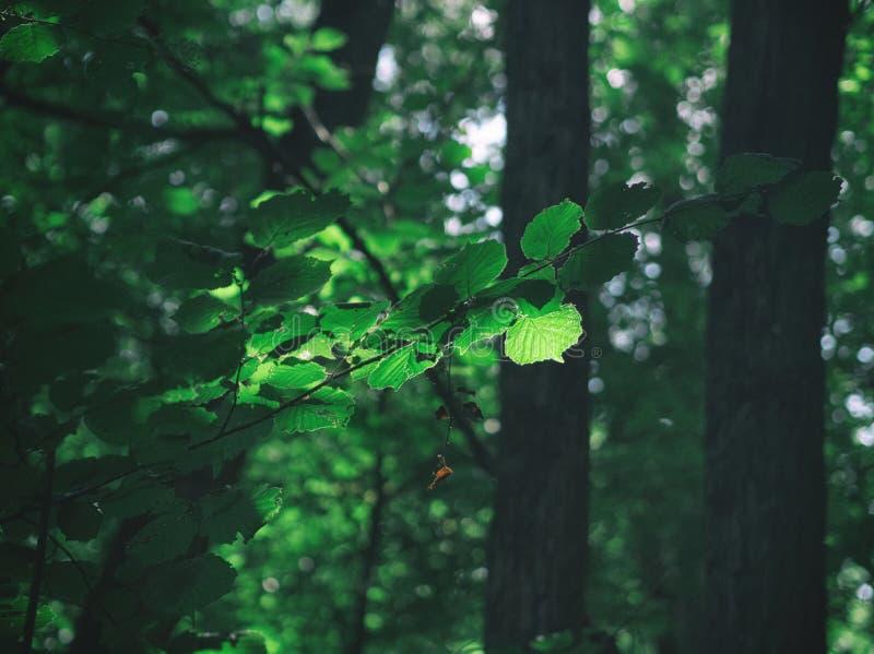 Forest Free Public Domain Cc0 Image