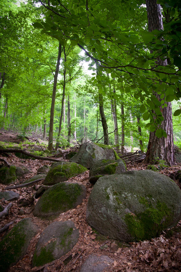 Forest. Geo park Felsenmeer (stone river), Germany stock photos