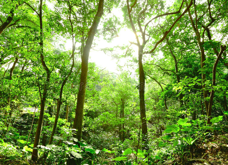 Download Forest stock image. Image of backlight, growth, forest - 19817221