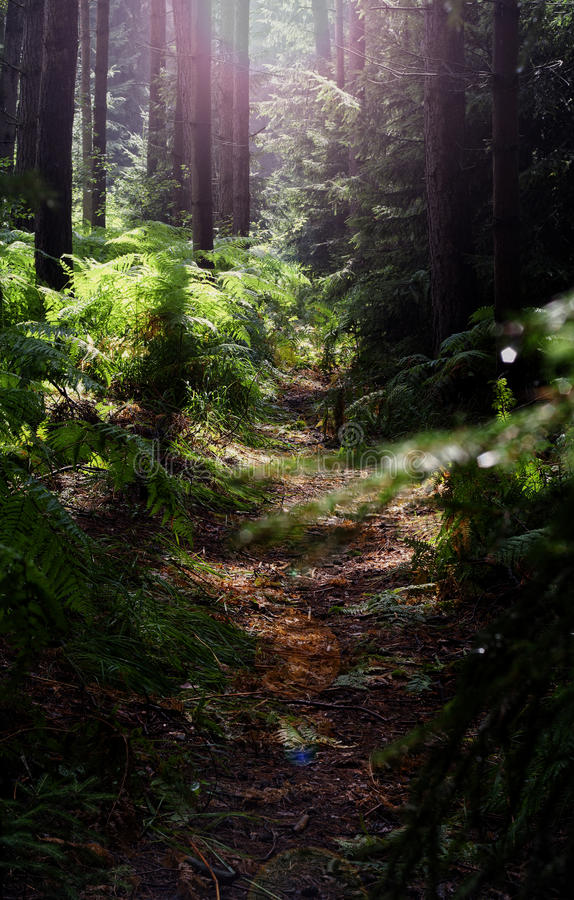 Forest. Deep forest summer daylight green stock images