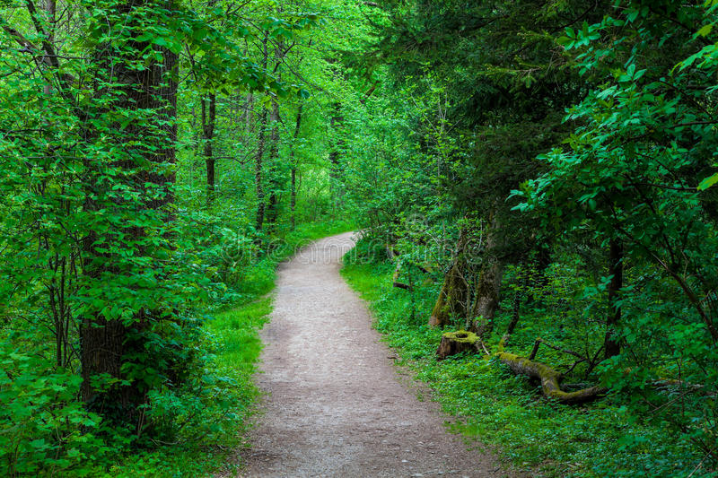 Download Forest stock photo. Image of austria, europe, road, woods - 24753294