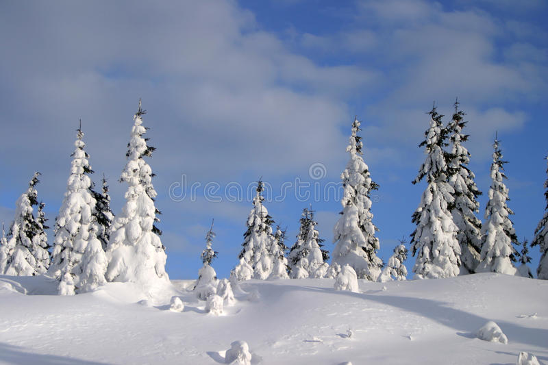 Download Forest stock image. Image of frozen, evergreen, ground - 25424927