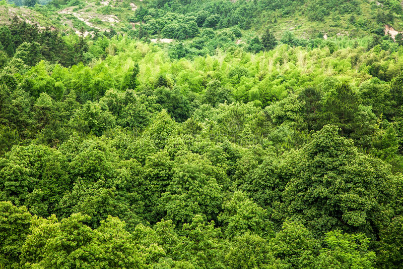 Download A forest stock photo. Image of landscape, foliage, countryside - 25458356