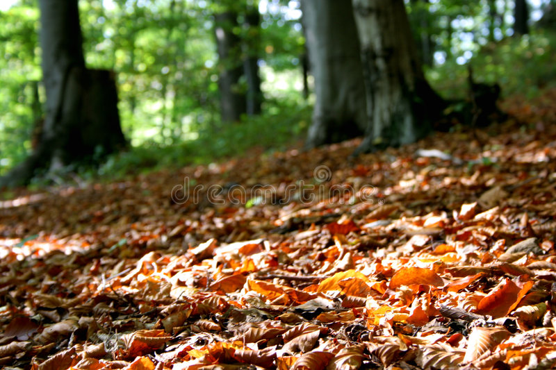 Download Forest stock image. Image of ground, timber, fall, autumn - 275163