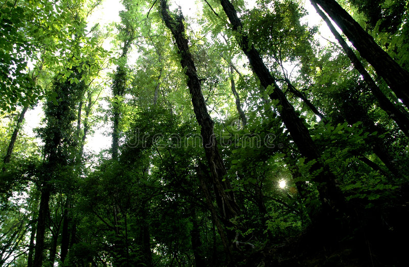 Download Forest Stock Photos - Image: 277103