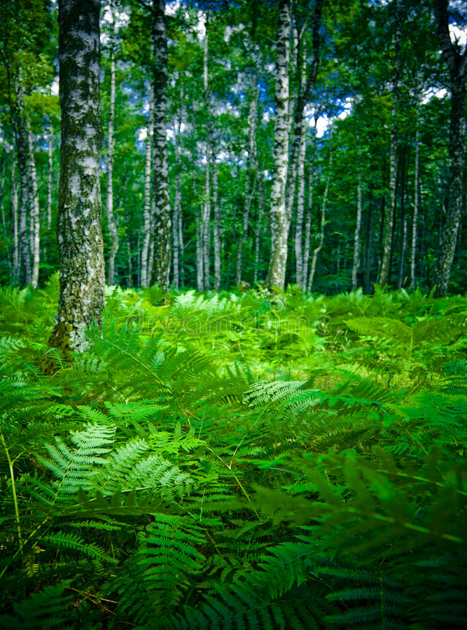 Free Forest Stock Photo - 2790040