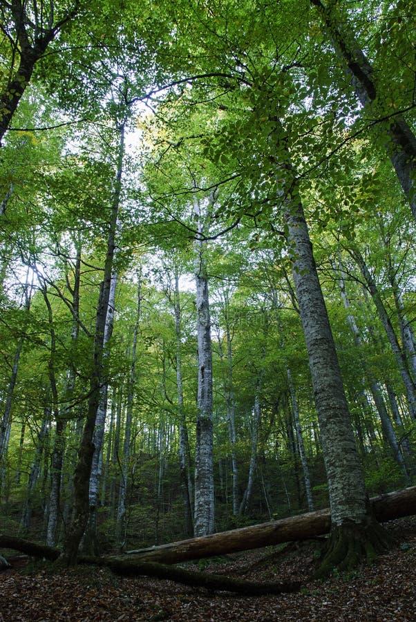 Download Forest stock image. Image of bolu, brown, color, landscape - 28551289