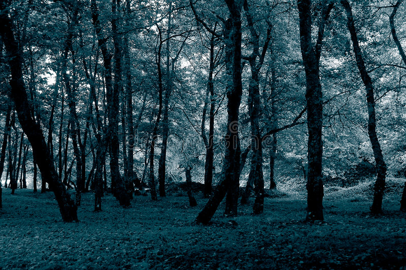 Download Forest stock image. Image of nobody, early, blue, brach - 299513