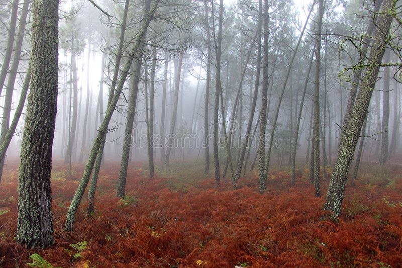 Download Forest stock photo. Image of season, country, grow, mount - 321390