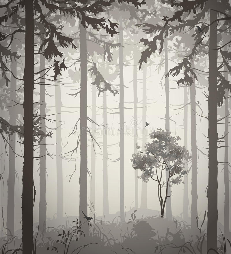 Free Forest Royalty Free Stock Image - 34161946