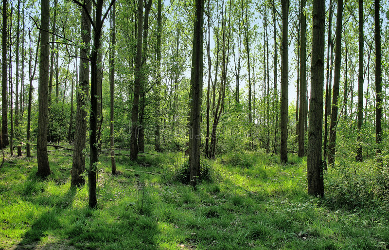 Download Forest Stock Images - Image: 3838994