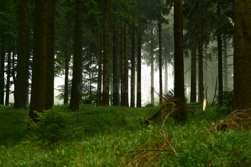 Download Forest #4 stock image. Image of range, tree, forest, green - 1374381
