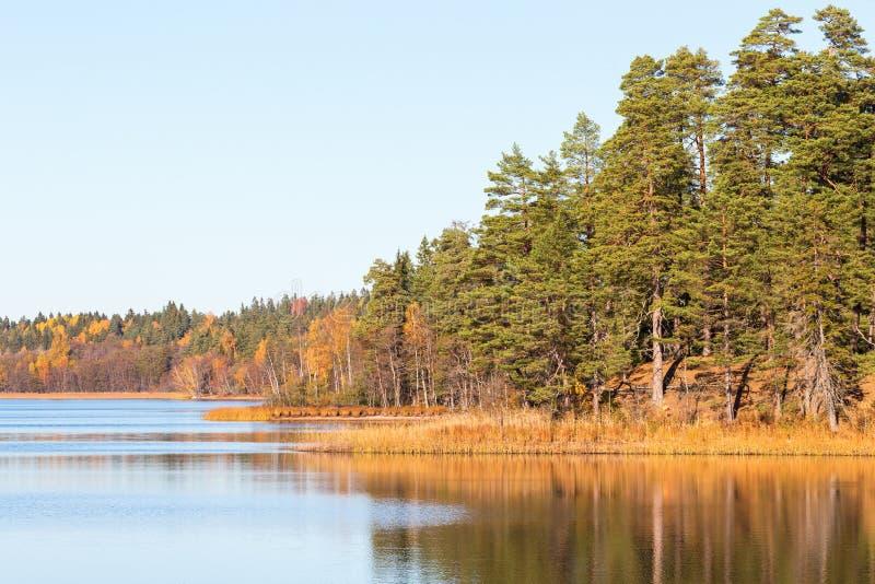 Download Forest湖 库存图片. 图片 包括有 边缘, 户外, 乡下, 平静, 反射, 杉木, 都市, 表面, 展望期 - 59112087