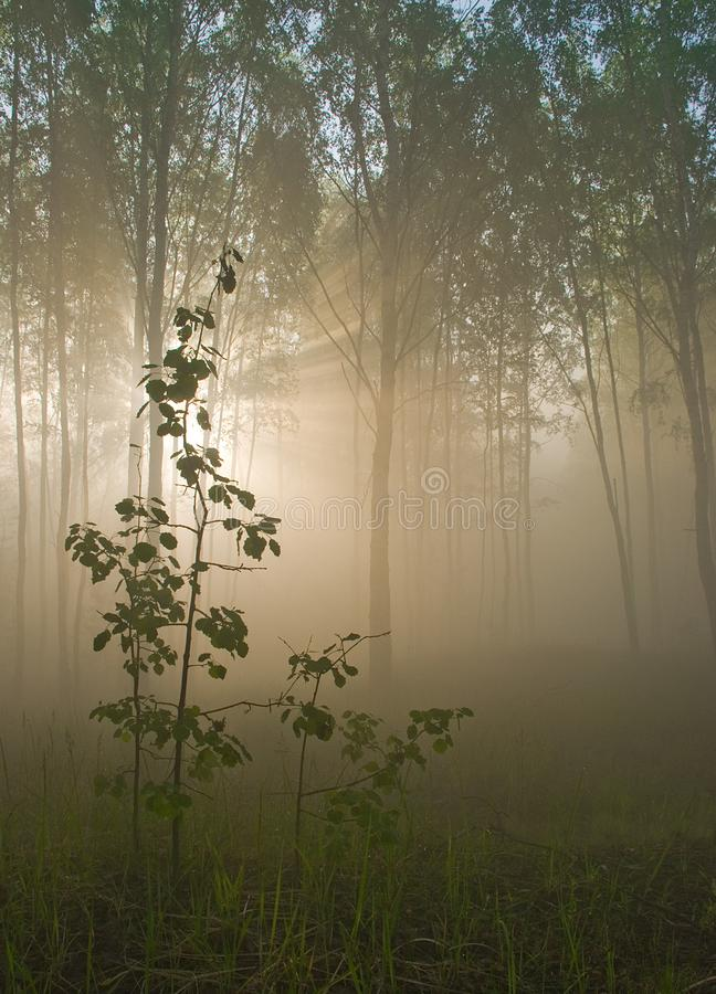 In the forest stock photography