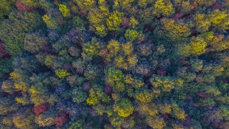 A forest from above with a drone royalty free stock photo