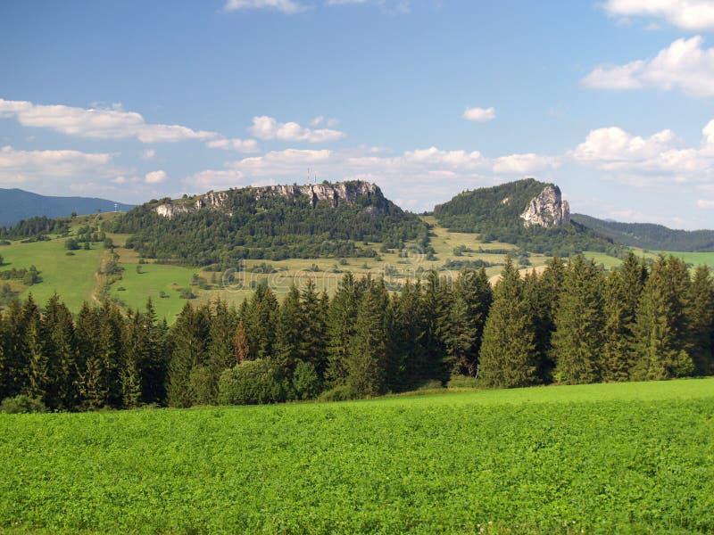 Forest above Vysny Kubin, Slovakia royalty free stock photos