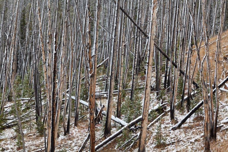 Forest Abstract quemado fotografía de archivo libre de regalías