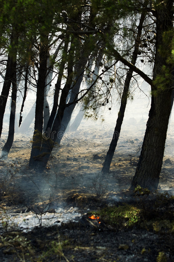 Free Forest After Fire Royalty Free Stock Photo - 2864355