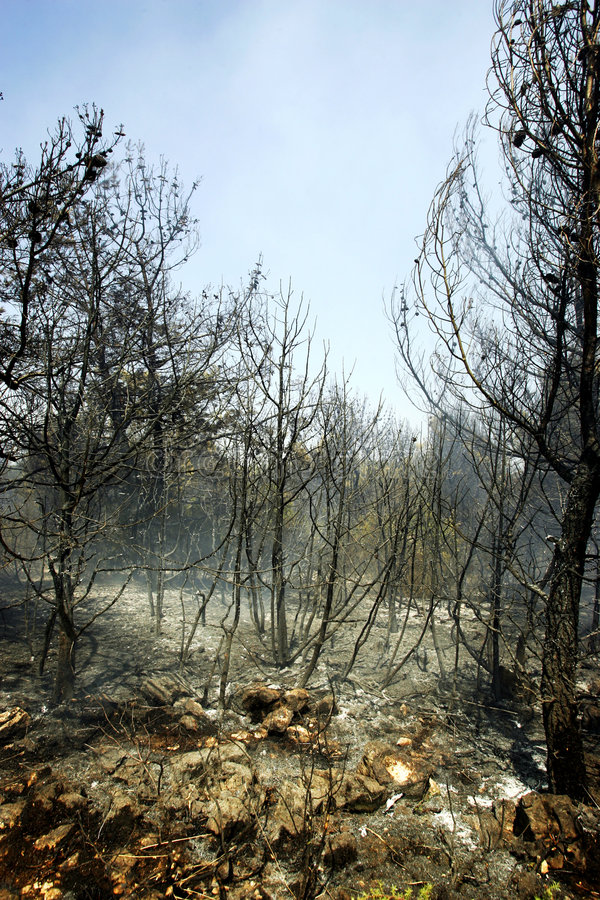 Free Forest After Fire Royalty Free Stock Photos - 2864638