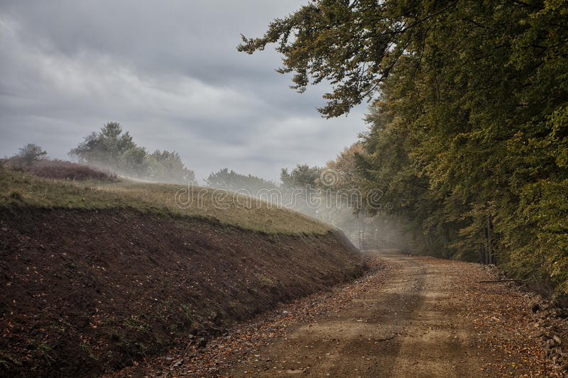 Download Forest alley stock image. Image of classic, autumn, storm - 25341965