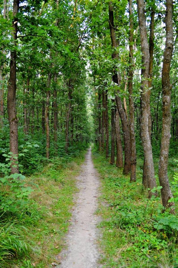 Forest Alley arkivfoton