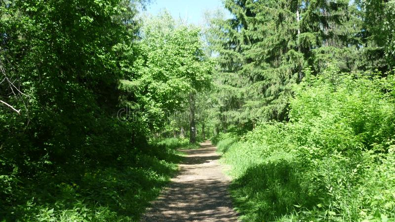 Forest alley in the Park royalty free stock photography
