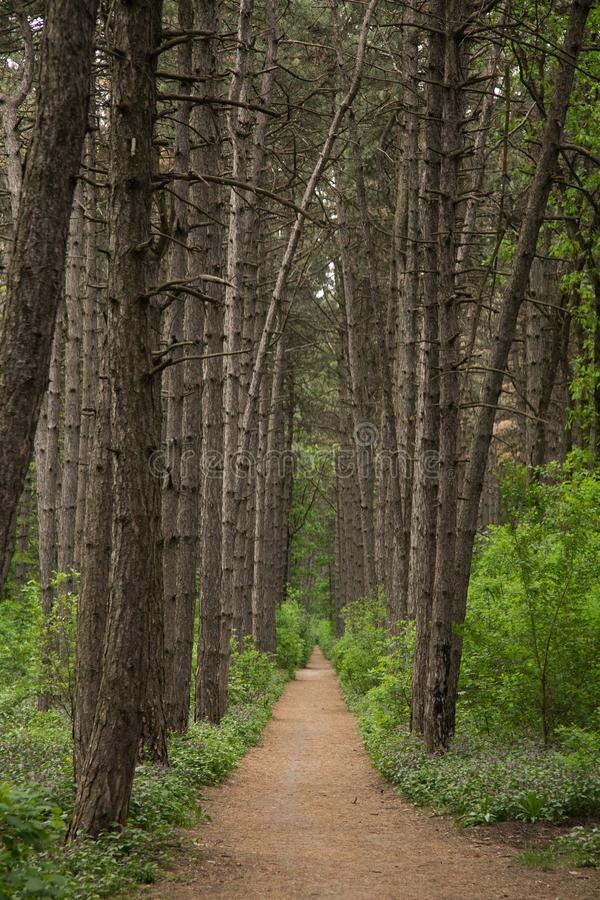forest alley stock photography