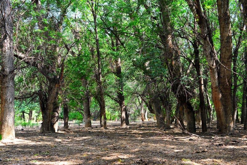 Download Forest Almaty kazakhstan imagem de stock. Imagem de agradável - 29838677
