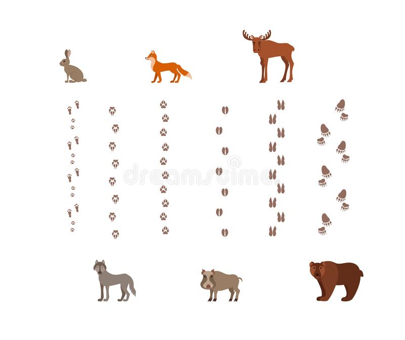 Forest animals with foot prints cartoon style colorful vector royalty free illustration