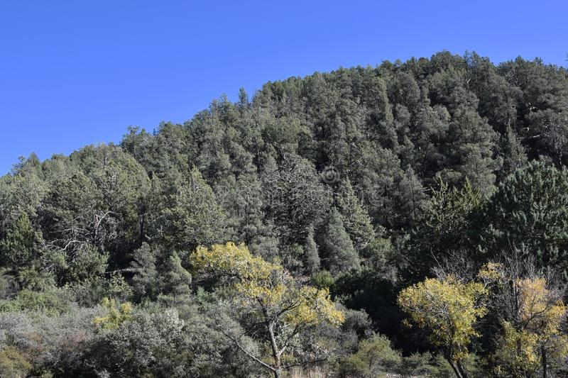 Forest in Arizona near Payson stock photos