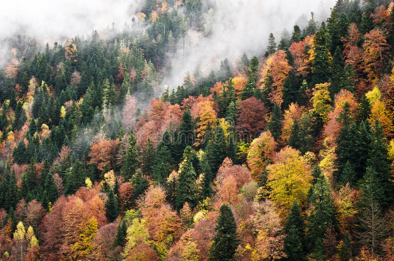 Forest in autumn. Landscape of forest in autumn with lots of different trees species stock photography