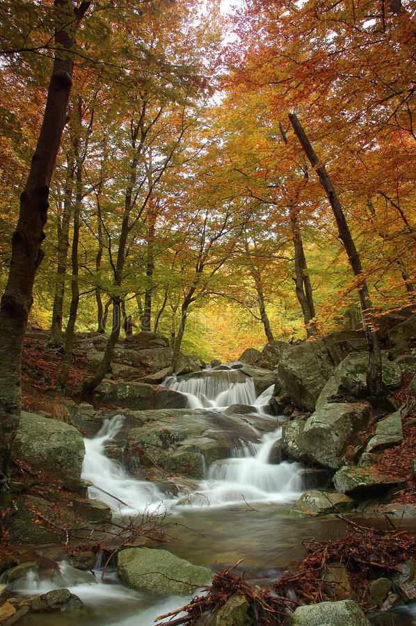 Download Forest in autumn stock image. Image of yellow, brown, bosque - 353601