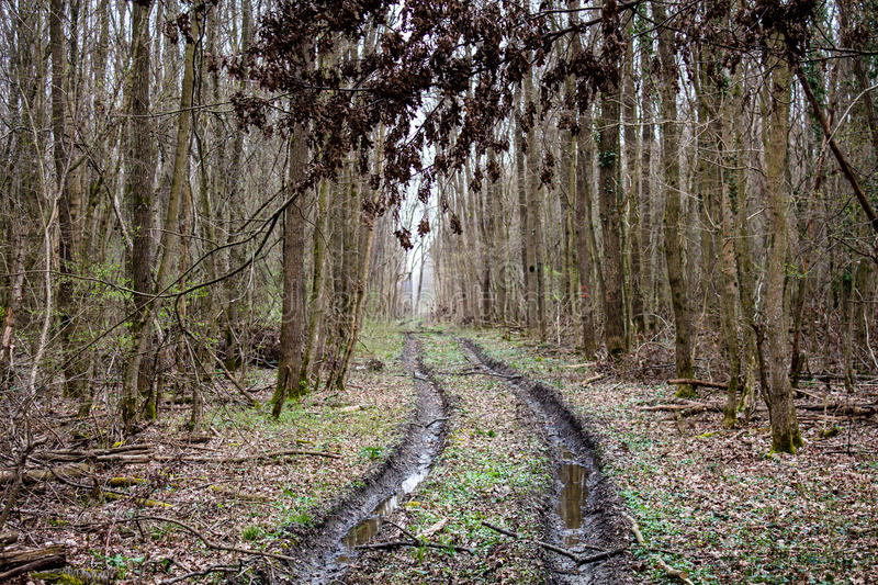 Forest in autumn and mud track path in it stock images