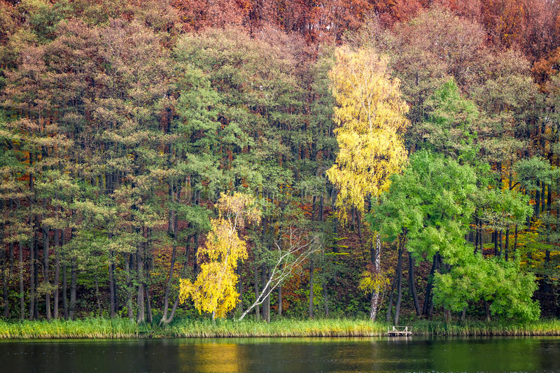 Forest in autumn over the lake stock photos