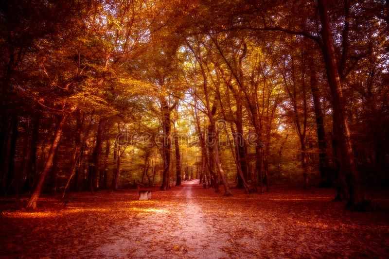 Forest in autumn. Processed colors, fantasy royalty free stock image